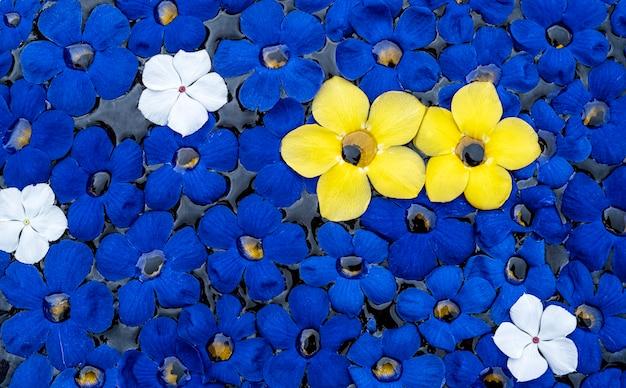 Fundo de flores azuis na água com duas flores allamanda amarelas como contraste