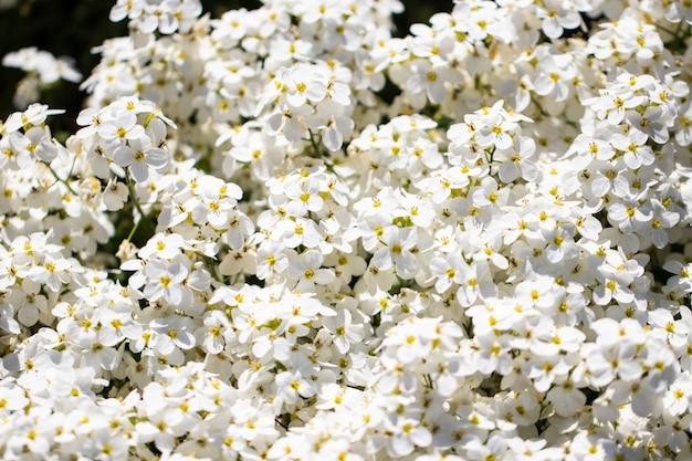 Fundo de flores brancas