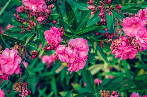 Fundo de flores cor de rosa