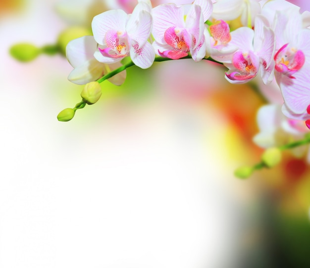 Fundo de flores de orquídea