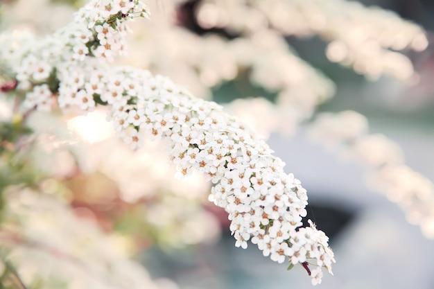 Fundo de flores de primavera.