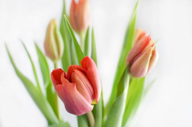 Fundo de flores tulipa colorida