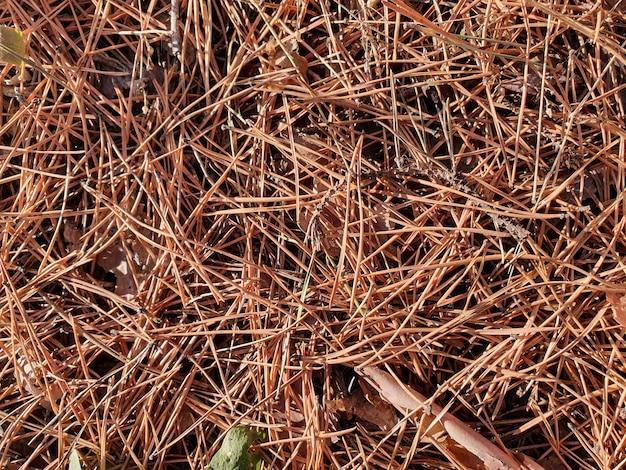Fundo de floresta com agulhas de cones