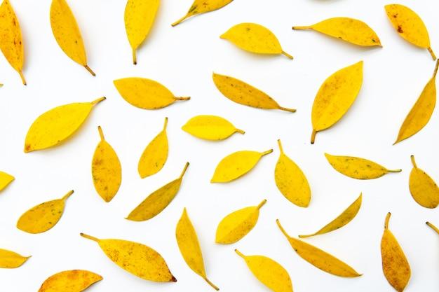 Fundo de folha amarela. outono criativo padrão de amarelo e laranja deixa em branco est