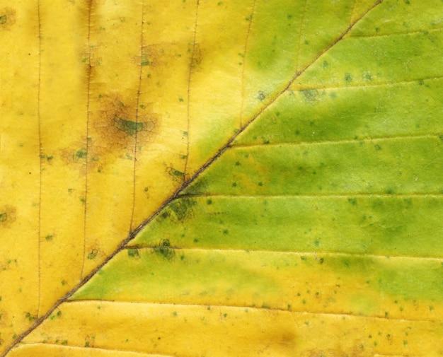 Fundo de folha de outono close-up