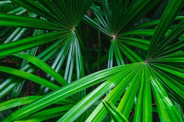 Fundo de folha de palmeira na floresta