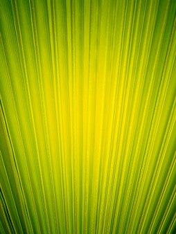 Fundo de folha de palmeira sólida verde brilhante