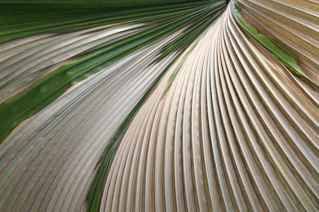 Fundo de folha de palmeira verde tropical soprando