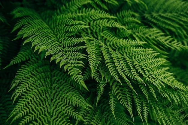 Fundo de folha de samambaia verde flora florestal
