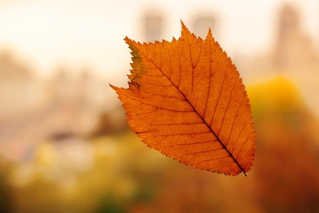 Fundo de folha outonal. cor amarela, laranja, marrom.
