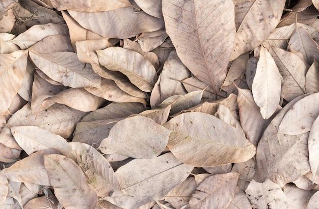 Fundo de folha seca