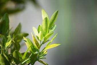 Fundo de folha verde, conceito de plano de fundo de natureza