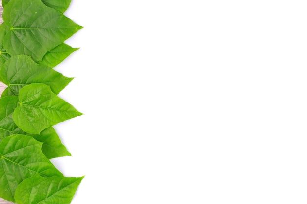 Fundo de folha verde isolada