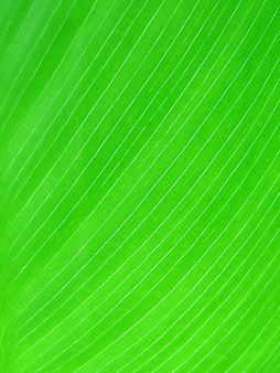 Fundo de folha verde molhada