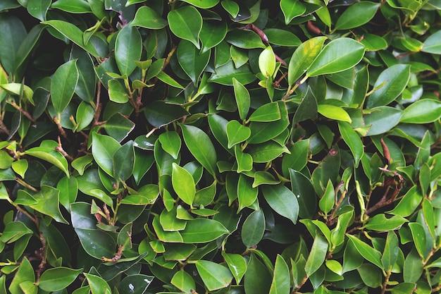 Fundo de folha verde. sobre a luz