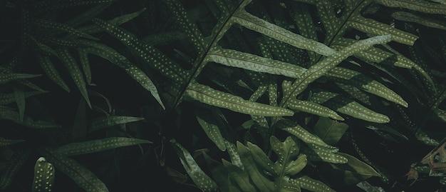 Fundo de folha verde tropical, tema de tom escuro.