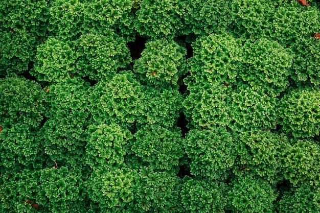 Fundo de folha verde.