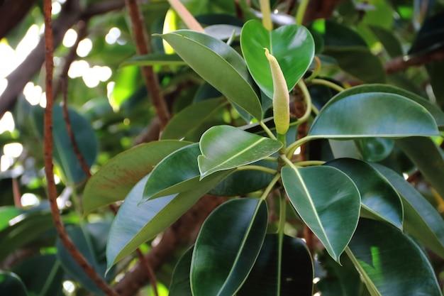 Fundo de folha verde