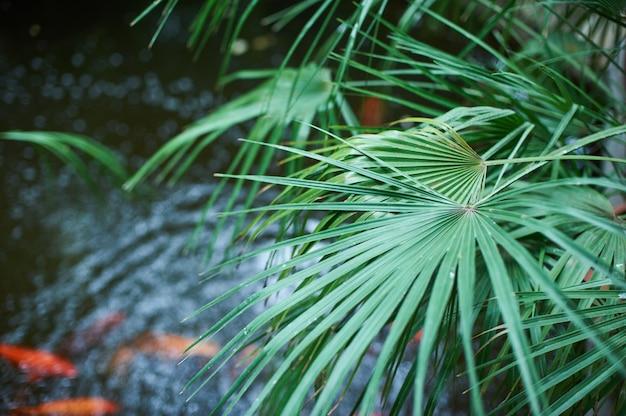Fundo de folhagem de palmeira verde, folhas de selva tropical com lago