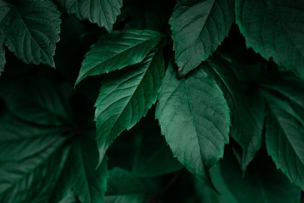 Fundo de folhagem verde escuro