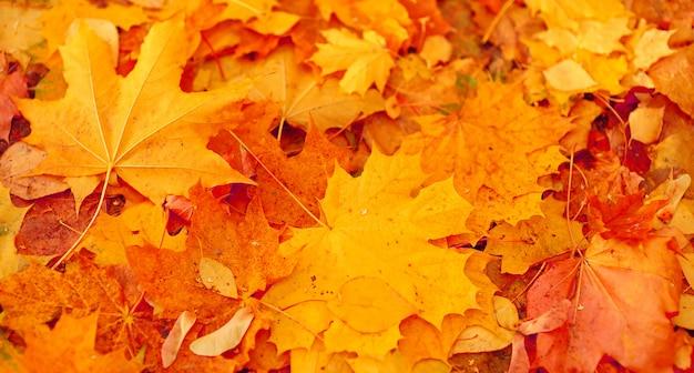 Fundo de folhas amarelas de outono