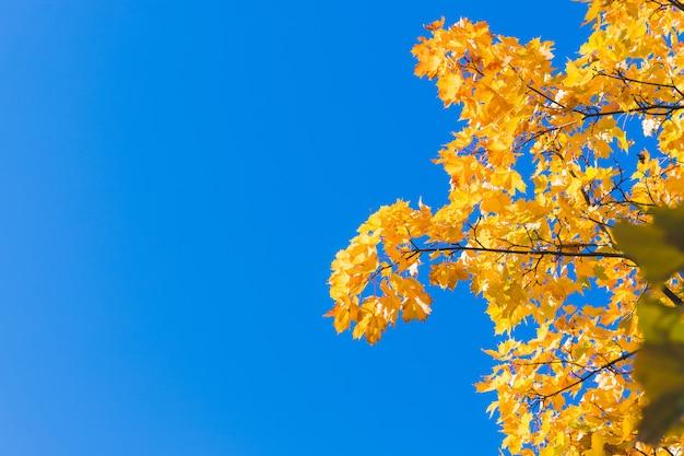 Fundo de folhas caídas de outono