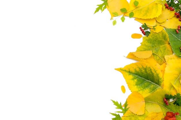 Fundo de folhas de outono amarelo.
