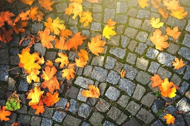 Fundo de folhas de outono caídas no pavimento de paralelepípedos.