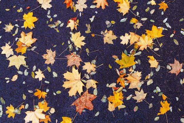 Fundo de folhas de outono. folhas caídas no outono no asfalto.