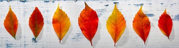 Fundo de folhas de outono. folhas de outono em madeira. vista do topo.
