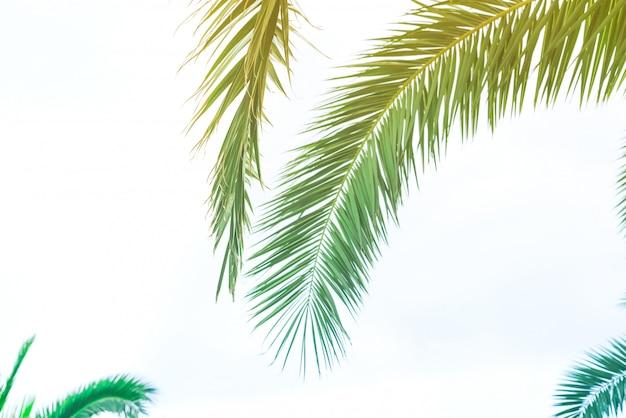 Fundo de folhas de palmeira com luz solar para design, design de viagens de férias tonificado vintage pastel efeito cópia espaço