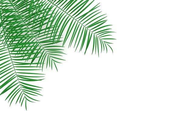Fundo de folhas de palmeira tropical folha tropical de verão