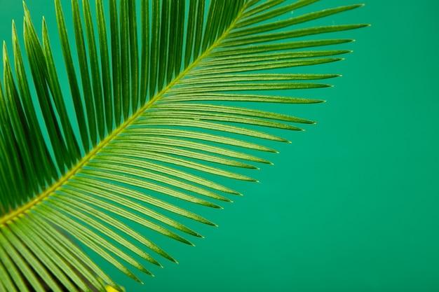 Fundo de folhas de palmeira verde verão