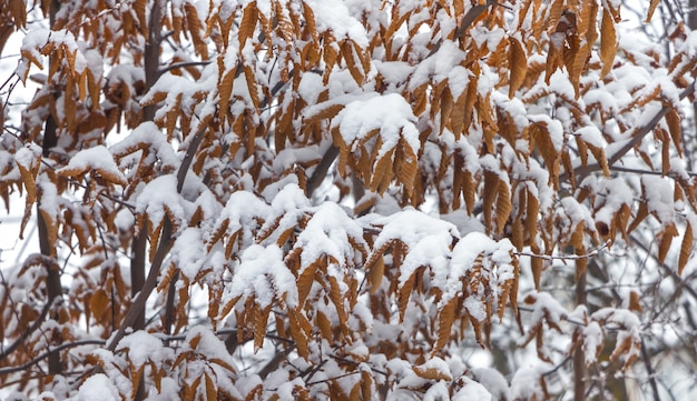 Fundo de folhas secas cobertas de neve_