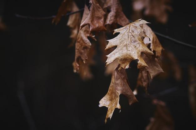 Fundo de folhas secas de outono