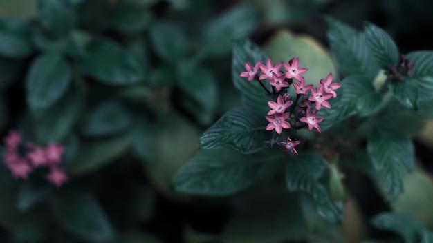 Fundo de folhas verdes com pequena pequena flor violeta