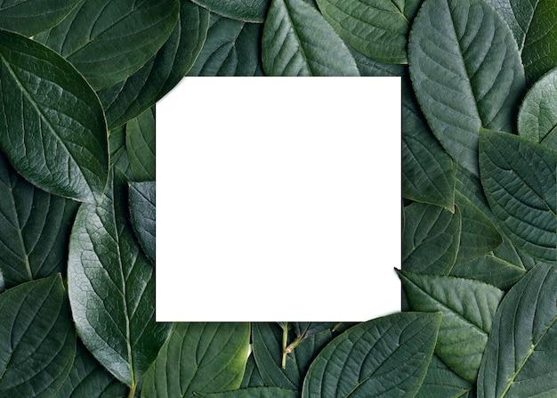Fundo de folhas verdes com quadrado de papel branco