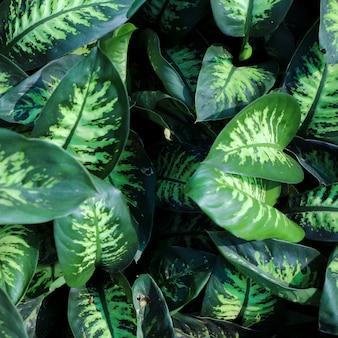 Fundo de folhas verdes de natureza