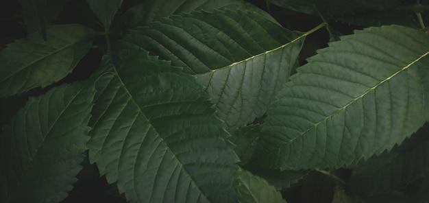 Fundo de folhas verdes escuras textura verde abstrata, fundos naturais, folhas tropicais