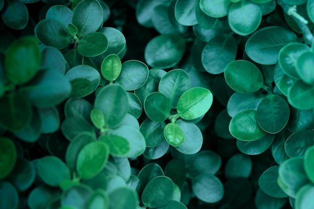 Fundo de folhas verdes escuras