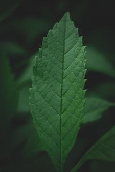 Fundo de folhas verdes escuro textura verde abstrata