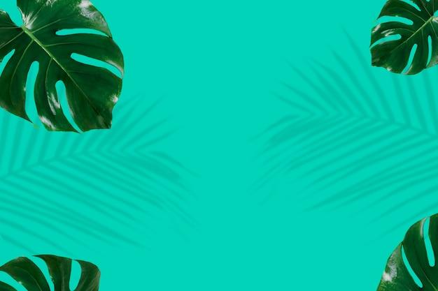 Fundo de folhas verdes frescas de monstera