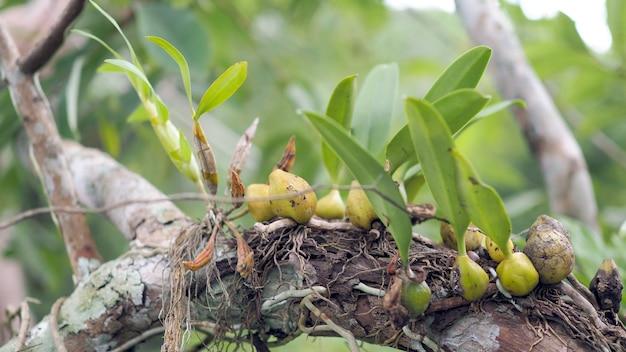 Fundo de folhas verdes. o verde deixa o parasita da planta em uma árvore.