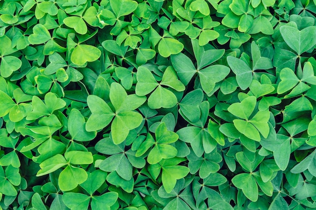 Fundo de folhas verdes ocupando toda a imagem