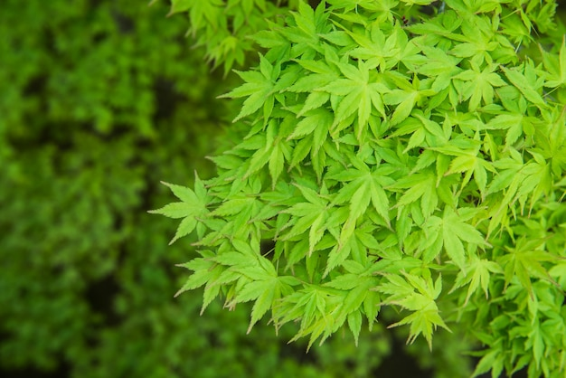Fundo de folhas verdes. papel de parede natural e textura no jardim.