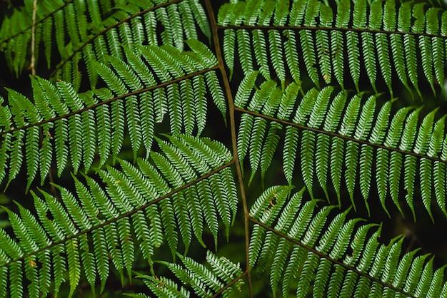 Fundo de folhas verdes. planta tropical, meio ambiente, foto conceito natureza e planta