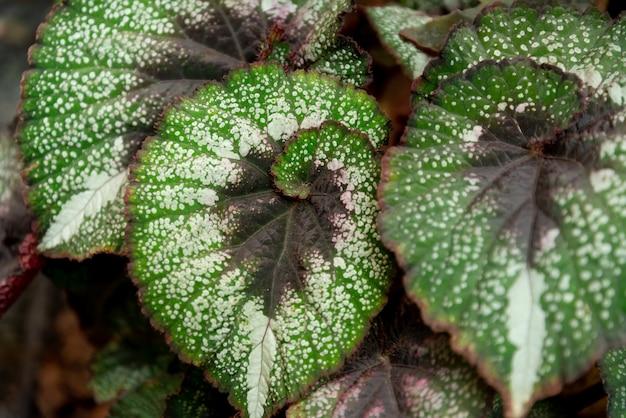 Fundo de folhas verdes. plantas caseiras. sequência de fibonacci