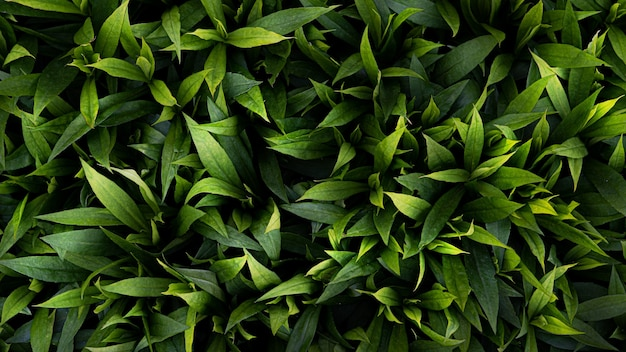 Fundo de folhas verdes. tapete de folhas verdes exuberantes em um dia quente de verão