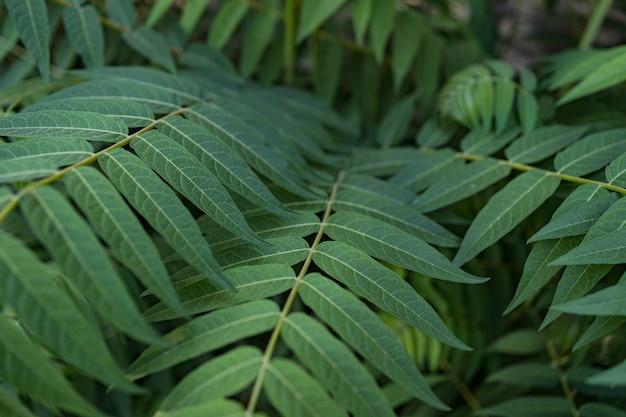 Fundo de folhas verdes,