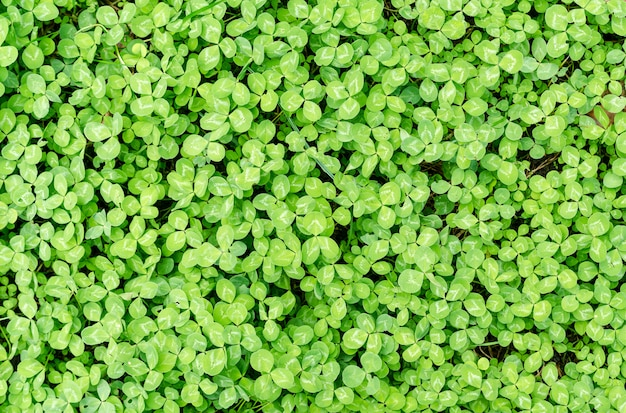 Fundo de folhas verdes Foto Premium